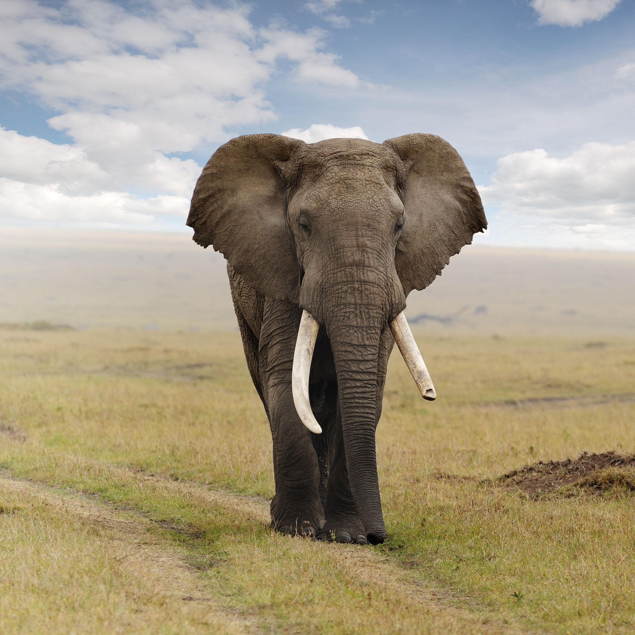 The free image gallery high resolution pictures stock images and photos - Image elephant ...