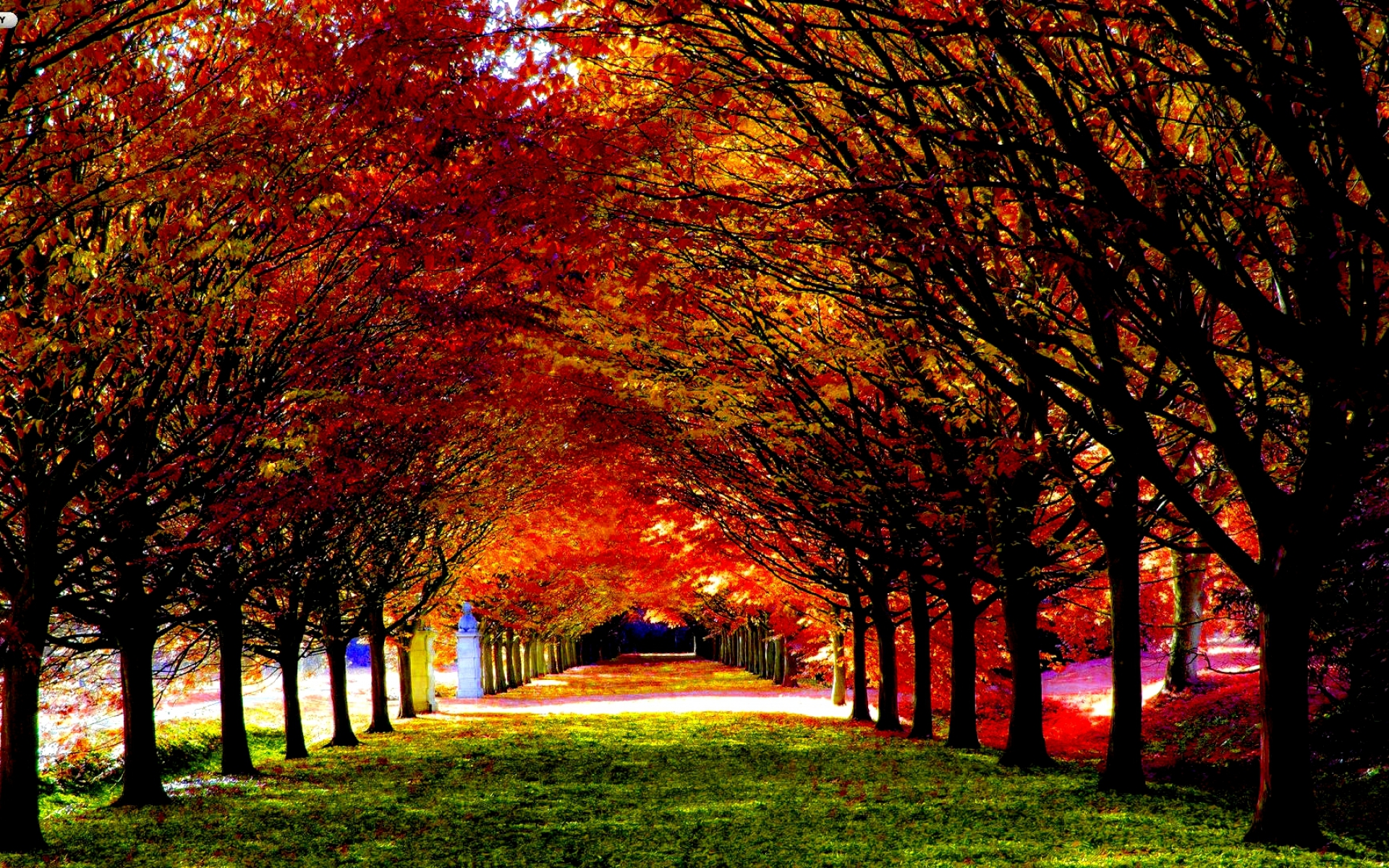 Autumn - Leaf carpeted road