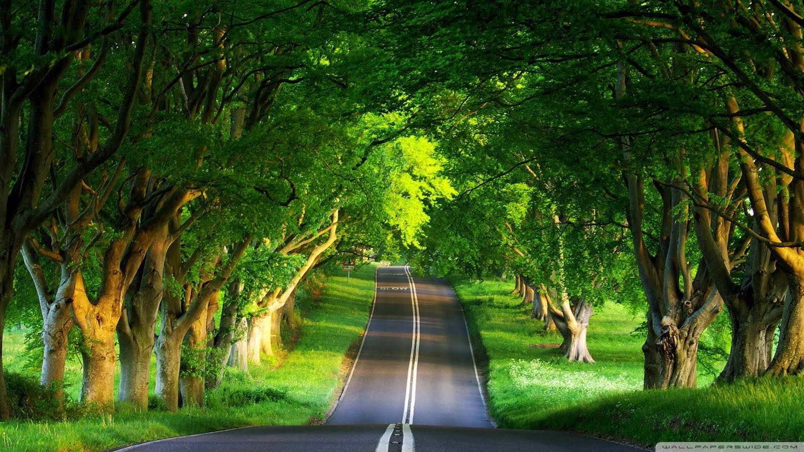 Nature - Beautiful Road
