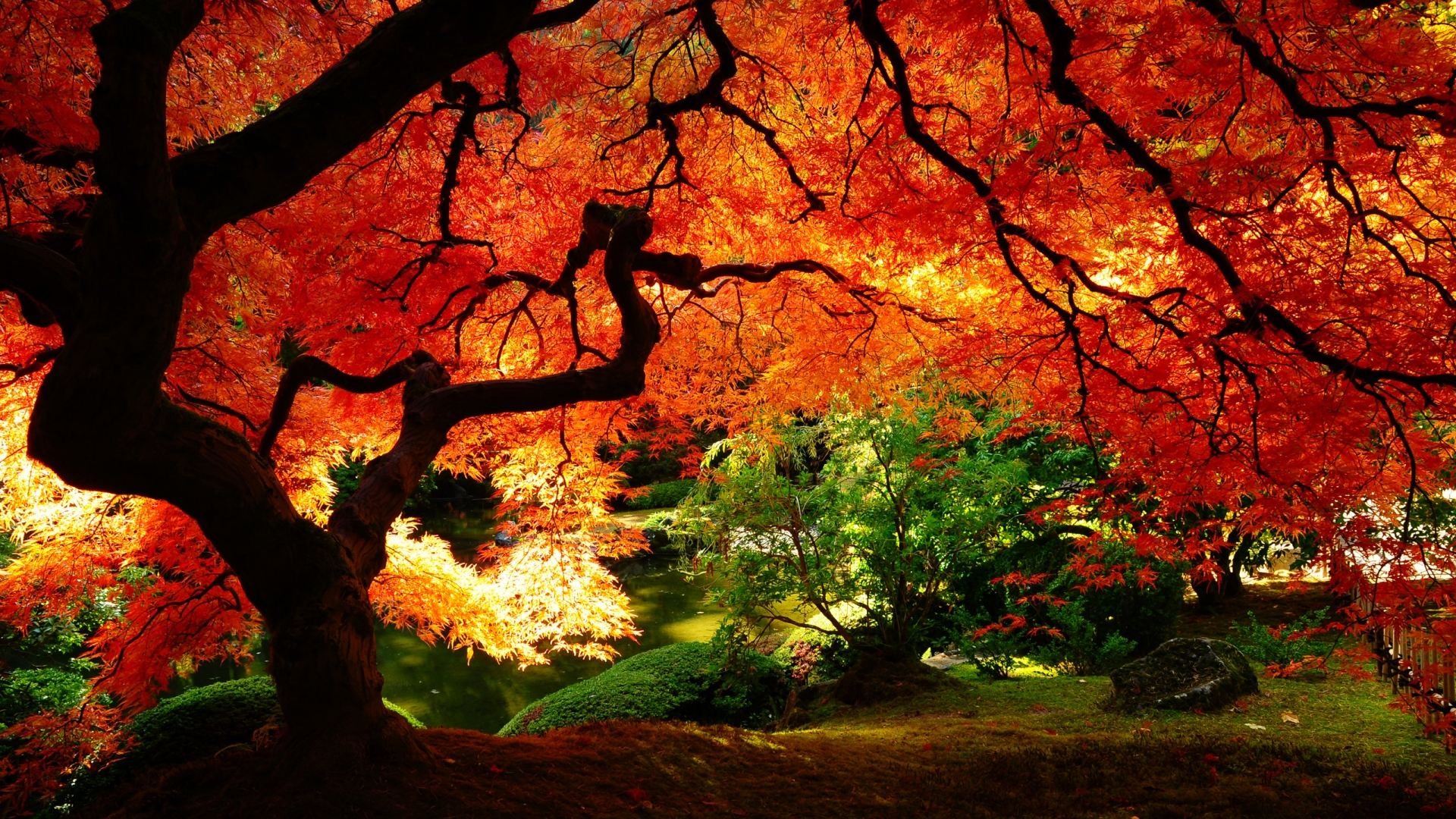 Autumn - Red Leafed Tree