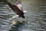 Eagle&Water